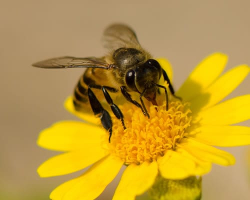 We take care to preserve and remove bees in a safe and controlled manner around Canberra.