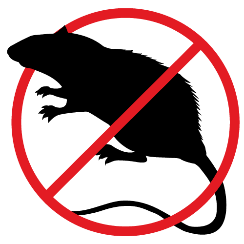 No one likes the sight of rats around their Canberra home, call Armageddon Pest Control to remove the pesky critters.