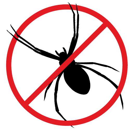 Spiders can be a real problem in your home, that's why we offer spider extermination services.